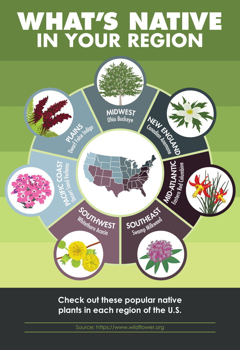 Native Plants Are Drought Tolerant - Artificial Grass Recyclers