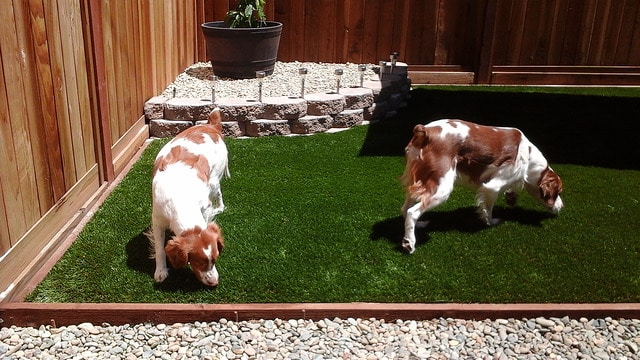 4 Ways Artificial Turf for Dogs Is Safe and Beneficial | Artificial Grass Recyclers