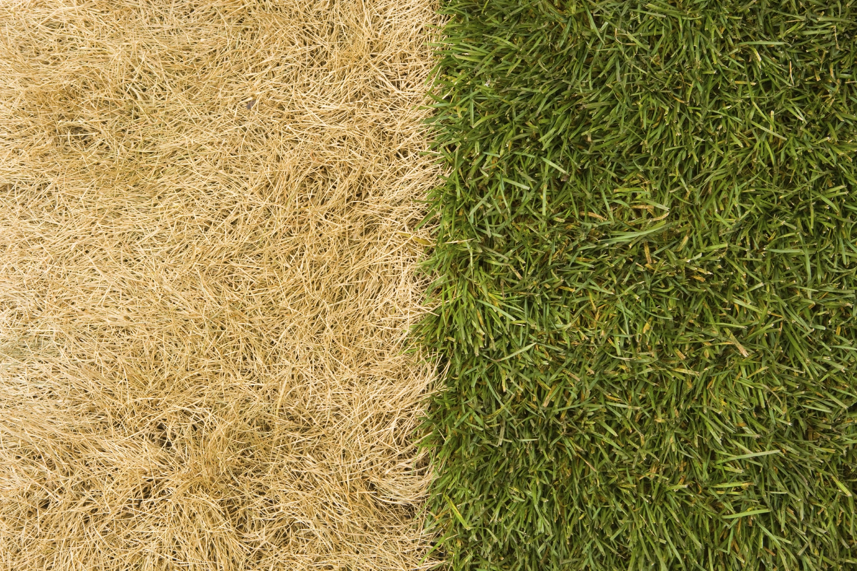 | Artificial Grass Recyclers
